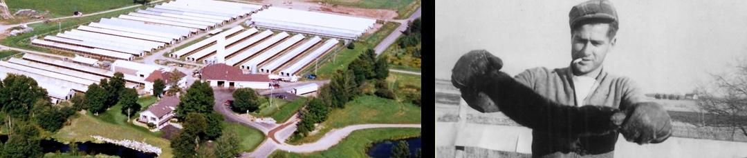 aerial-view-of-patrick-fur-farm-1997