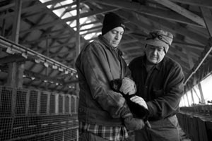 Kyle Patrick and Mike Patrick live grading a mink